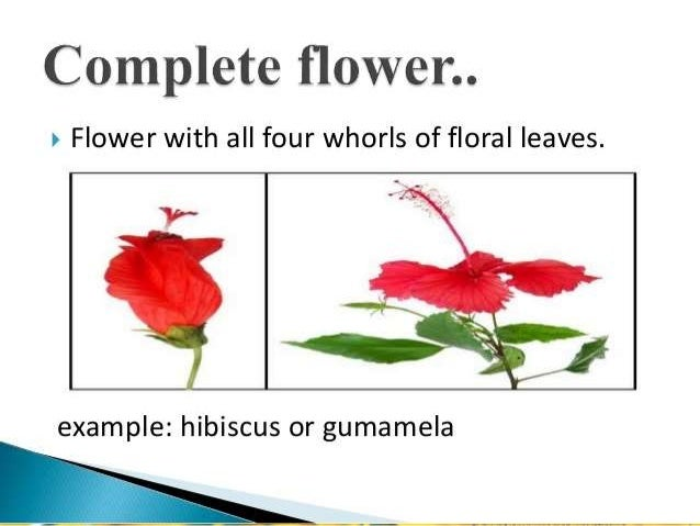 Flowers And Floral Formula