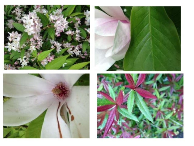 Flower close ups