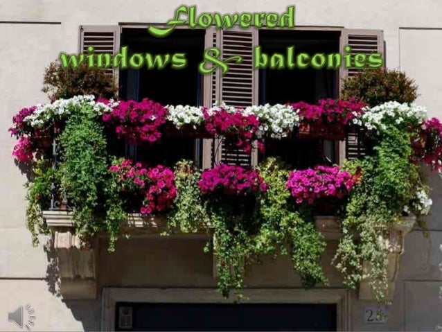 Flowered windows & balconies (v.m.)