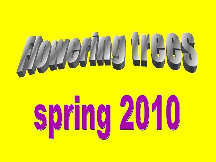 Flowering trees spring 2010