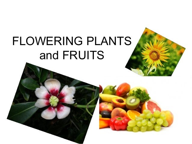 FLOWERING PLANTS   and FRUITS