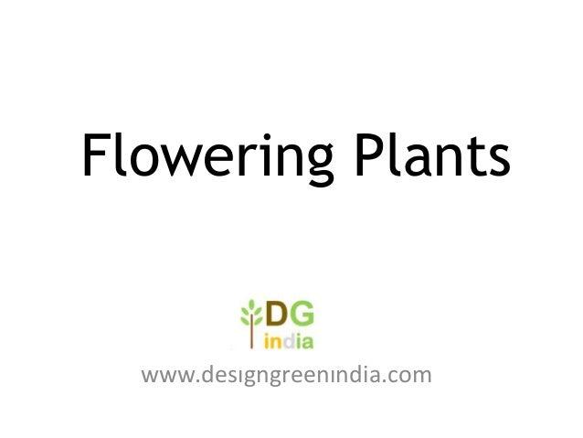 Flowering Plants  www.designgreenindia.com