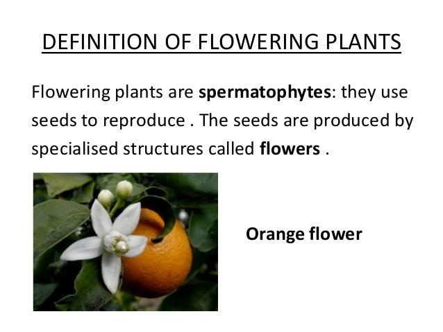 flowering plants, Natural flower