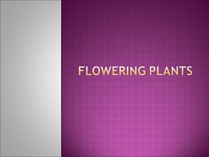 SHOOT                               ROOT    Stem   Branches   Leaves   Flowers (contains   reproductive organ of the p...