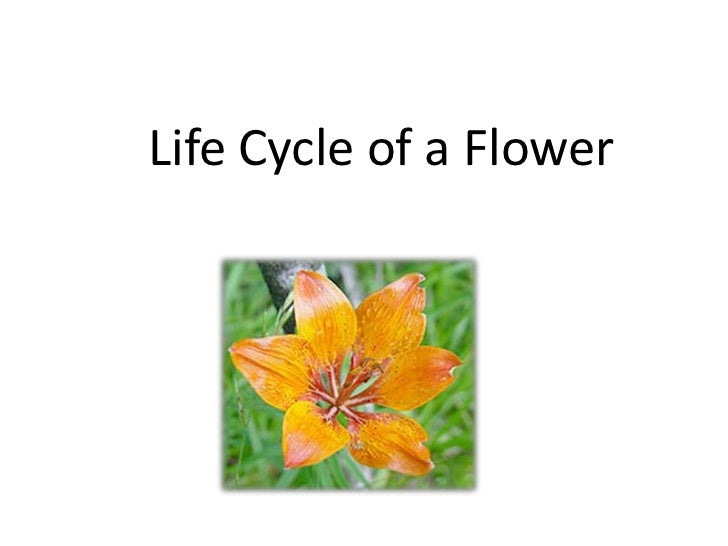 Pictures Of Lifecycle Of A Flower 27