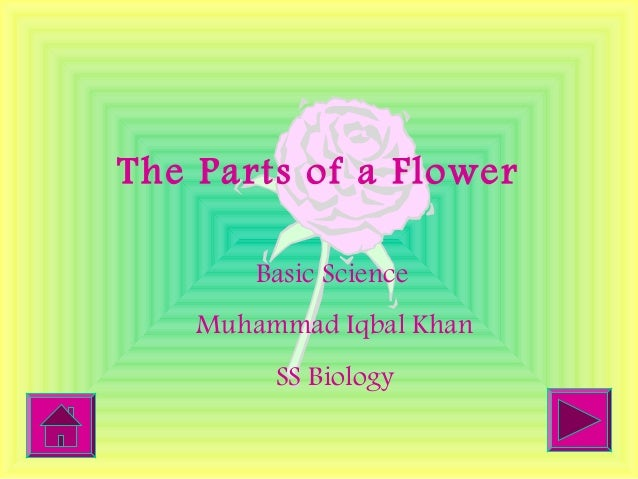 The Parts of a Flower Basic Science Muhammad Iqbal Khan SS Biology