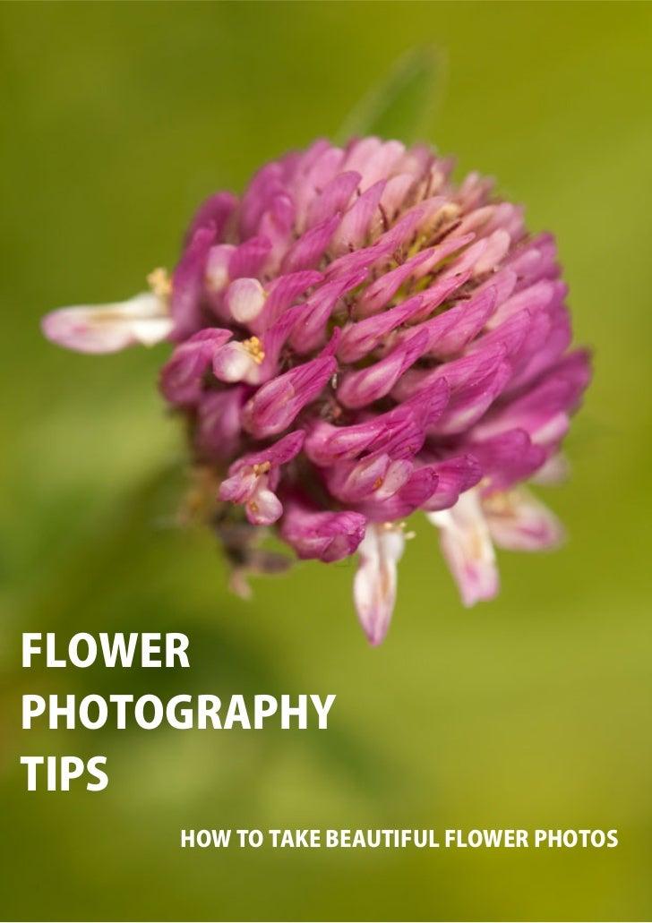 FLOWERPHOTOGRAPHYTIPS     HOW TO TAKE BEAUTIFUL FLOWER PHOTOS