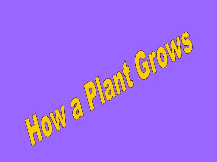 How a Plant Grows   <br />