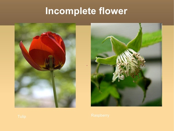 Incomplete flowers are generally unisexual