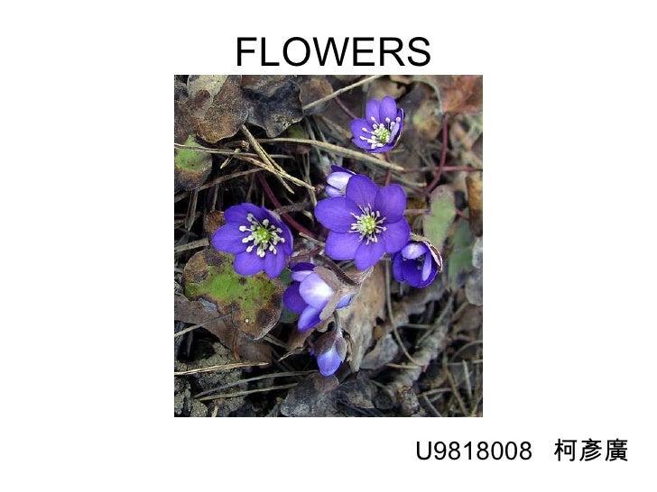 FLOWERS U9818008  柯彥廣