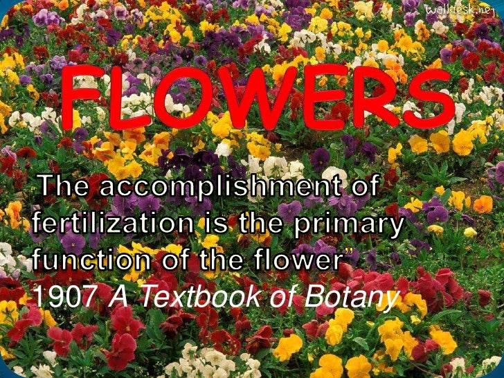 """Flowers<br />""""The accomplishment of fertilization is the primary function of the flower""""<br />1907 A Textbook of Botany<br />"""