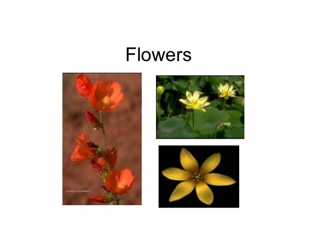 Incomplete flowers are generally unisexual look