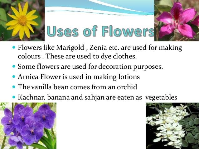 Flowers Ppt By Aditya Sharma
