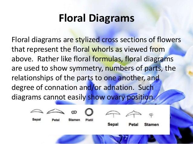 Flowers 31 floral diagram symbols i ccuart Images
