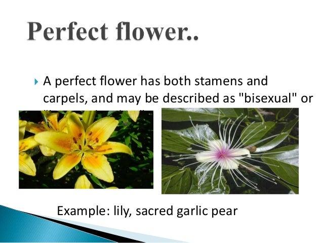 Unisexual flower diagram blank