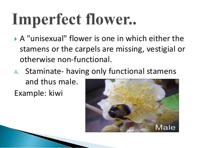 Incomplete flowers are generally unisexual definition