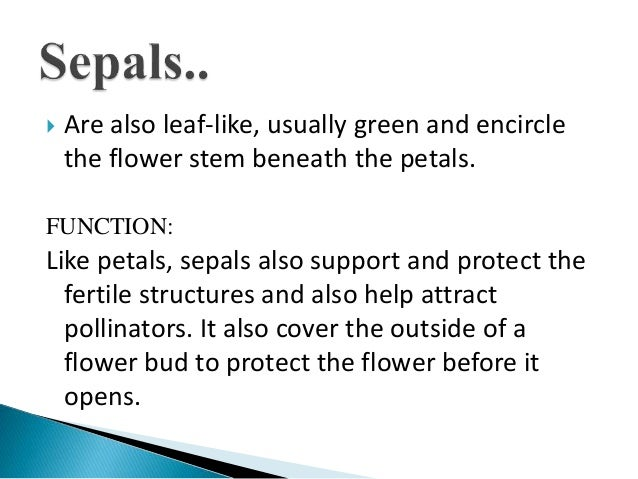 Flowers Parts And Functions