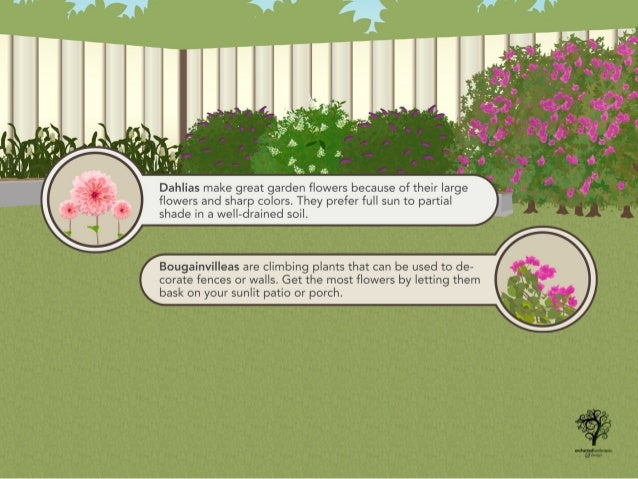 Flowers and Shrubs to Grow This Summer Slide 3
