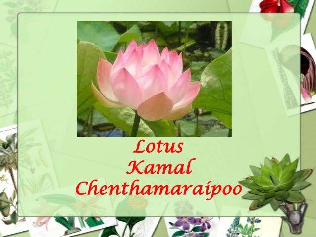 Flowers and their names lotus kamal chenthamaraipoo mightylinksfo