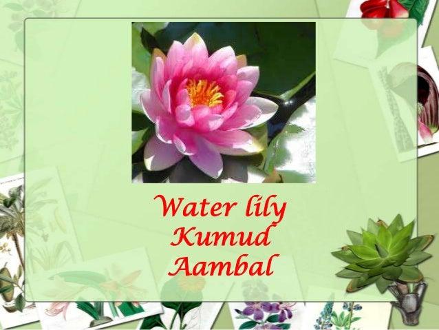 Flowers and their names tanners cassia tarwar avarmpoo 22 mightylinksfo
