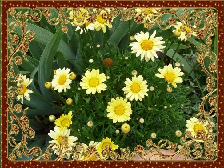 Flowers by aniko