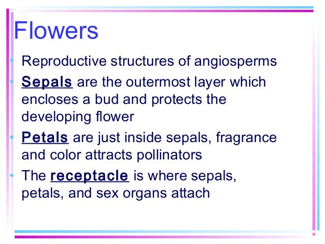 Flowers • Reproductive structures of angiosperms • Sepals are the outermost layer which encloses a bud and protects the de...