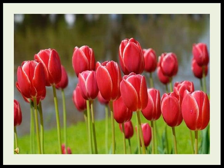 Flowers For My Friends (V M ) Slide 2