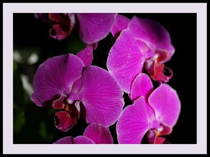 Flowers For My Friends (V M ) Slide 3