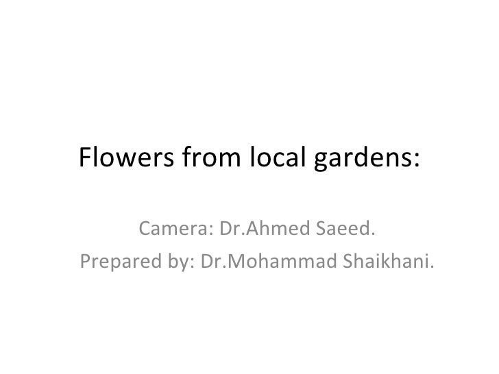 Flowers from local gardens: Camera: Dr.Ahmed Saeed. Prepared by: Dr.Mohammad Shaikhani.