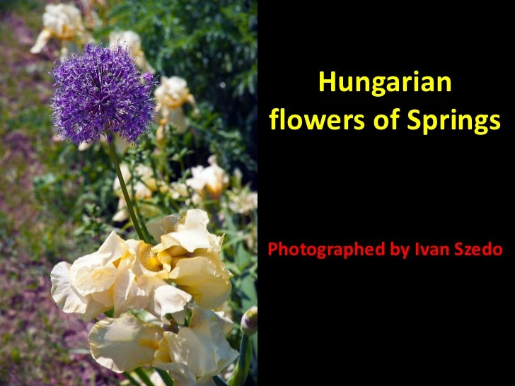 Hungarian flowers of Springs Photographed by Ivan Szedo