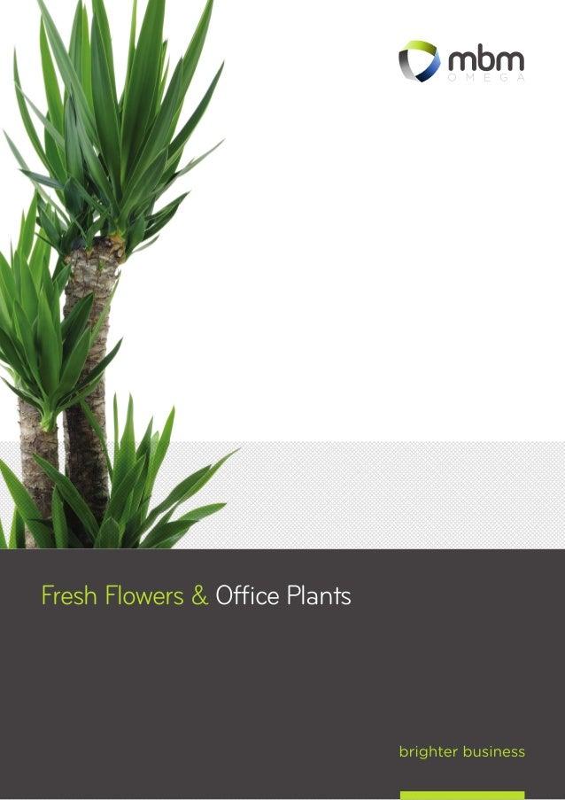 1 fresh flowers u0026 office plants - Office Plants