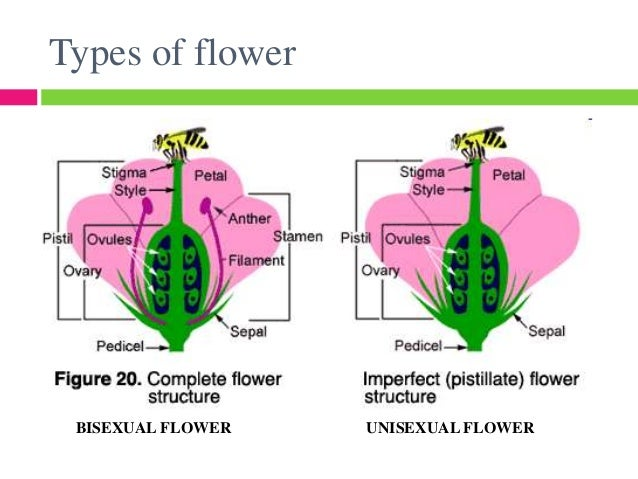 Parts of a bisexual flower