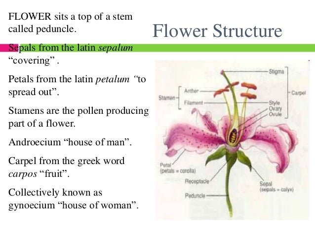 Hibiscus flower parts diagram of a male diy wiring diagrams flower structure 5 638 jpg cb 1435863564 rh slideshare net flower labels and functions parts of a flower drawing ccuart Gallery
