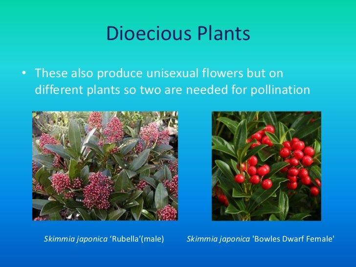 Unisexual flowers ppt