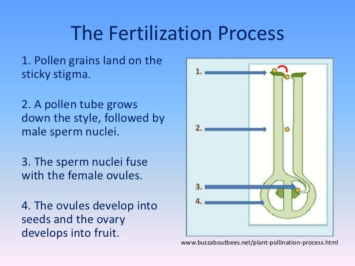 Flower Structure  Pollination  Fertilization