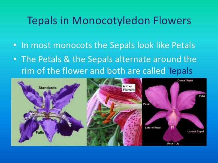Flower Structure  Pollination  Fertilization