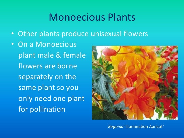 Unisexuality meaning of flowers