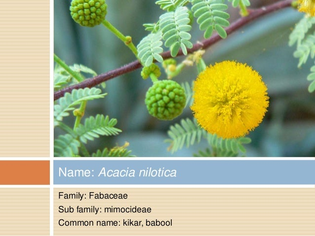 Flowers with botanical names