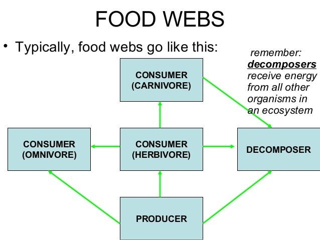 what is the relationship between primary productivity and food webs