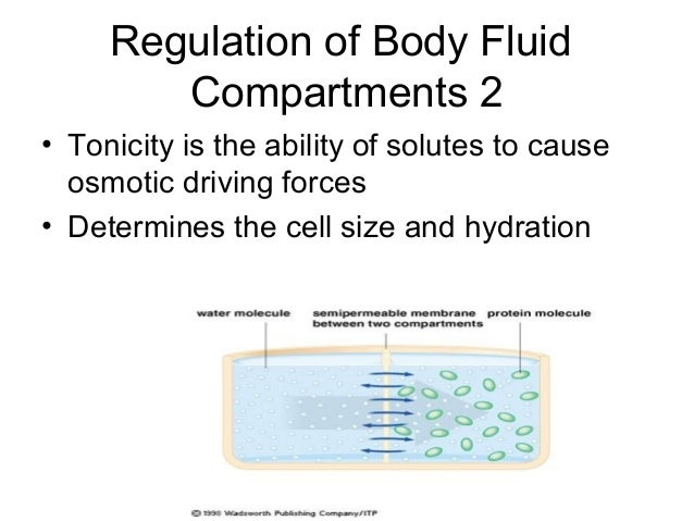 fluid and electrolytes: balance and disturbance essay Electrolytes are minerals in your body that have an electric charge they are in  your blood, urine, tissues, and other body fluids.