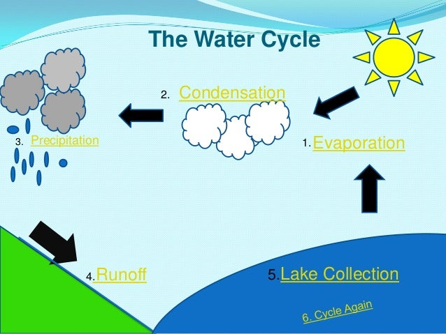 The Water Cycle Precipitation Runoff Condensation Evaporation 5