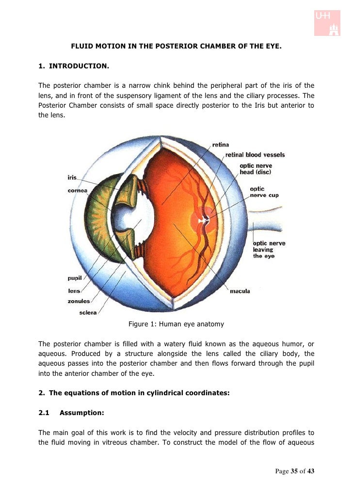 FLUID MOTION IN THE POSTERIOR CHAMBER OF THE EYE.1. INTRODUCTION.The posterior chamber is a narrow chink behind the periph...