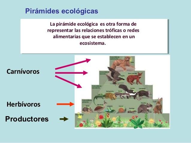 Único Pirámide Ecológica Hoja De Trabajo Regalo - hojas de trabajo ...
