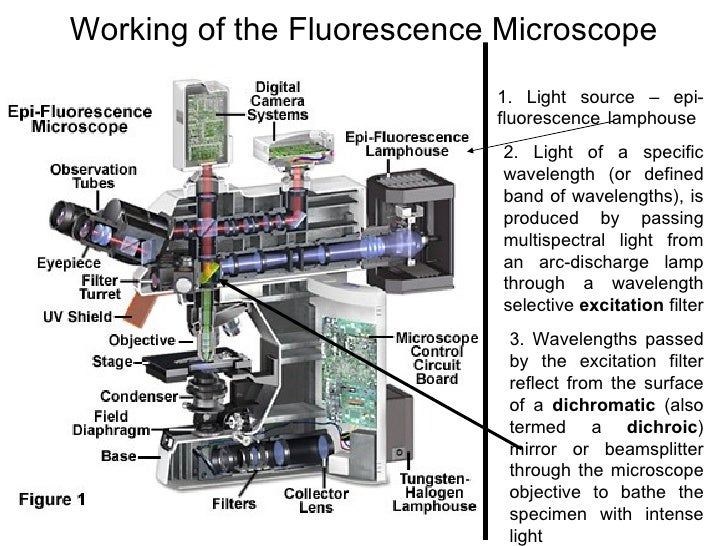 guide to thin section microscopy pdf