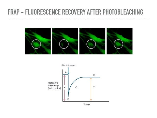 Fluorescence microscopy introduction ccuart Image collections