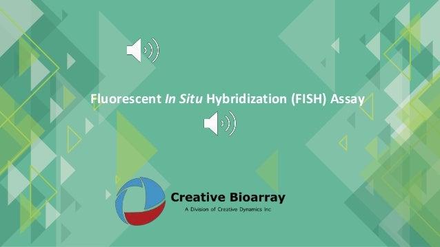 Fluorescent In Situ Hybridization (FISH) Assay
