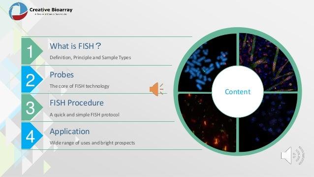 Fluorescentin situhybridization (fish) assay Slide 2