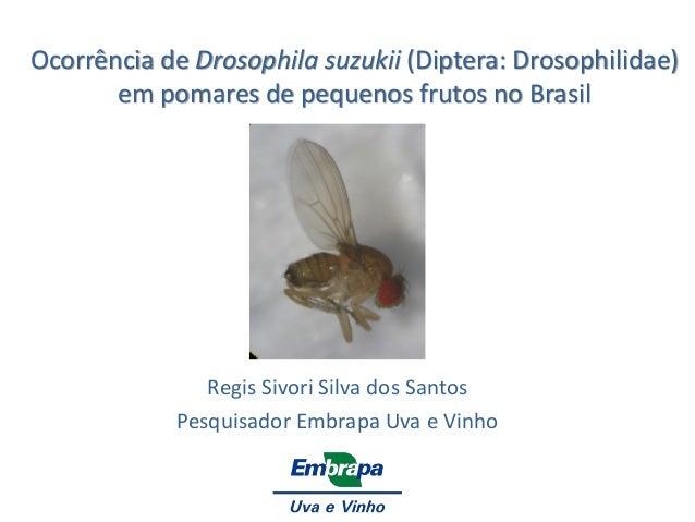 Ocorrência de Drosophila suzukii (Diptera: Drosophilidae) em pomares de pequenos frutos no Brasil  Regis Sivori Silva dos ...