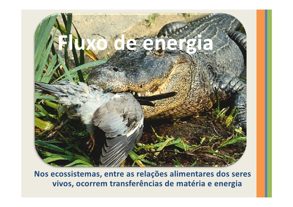Fluxo de energia     Nos ecossistemas, entre as relações alimentares dos seres     vivos, ocorrem transferências de matéri...