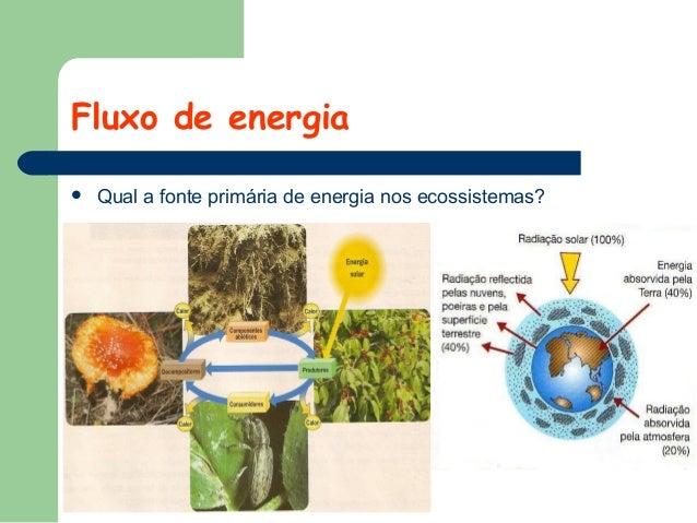 Fluxo de energia   Qual a fonte primária de energia nos ecossistemas?